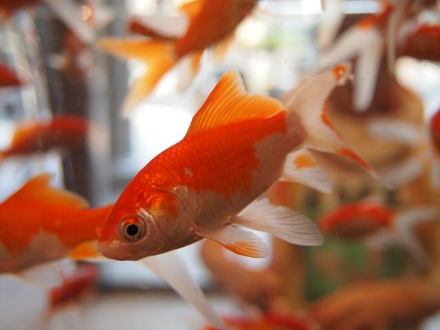 【新宿早稲田の整体】腰痛に金魚運動は有効か?セルフケアのススメ【早稲田駅前整体院yabecafe】